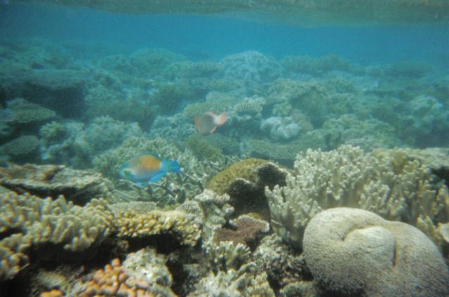 Great Barrier Reef Coral 1 (Small).jpg