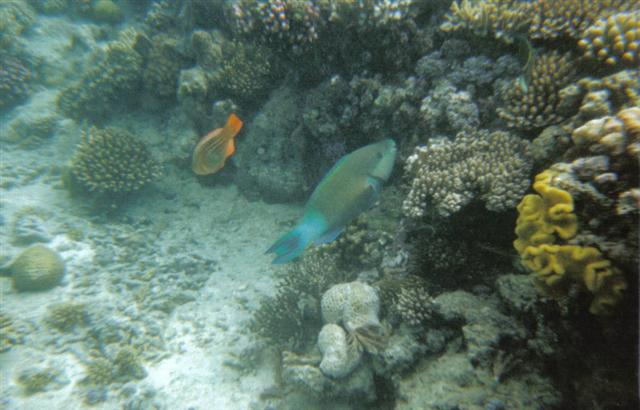 Great Barrier Reef Marine Life 1 (Small).jpg