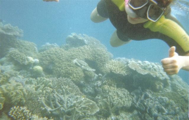 Diving Queensland Reefs (Small).jpg