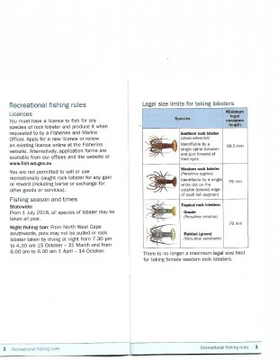 Rock Lobster Guide 3-4.jpg